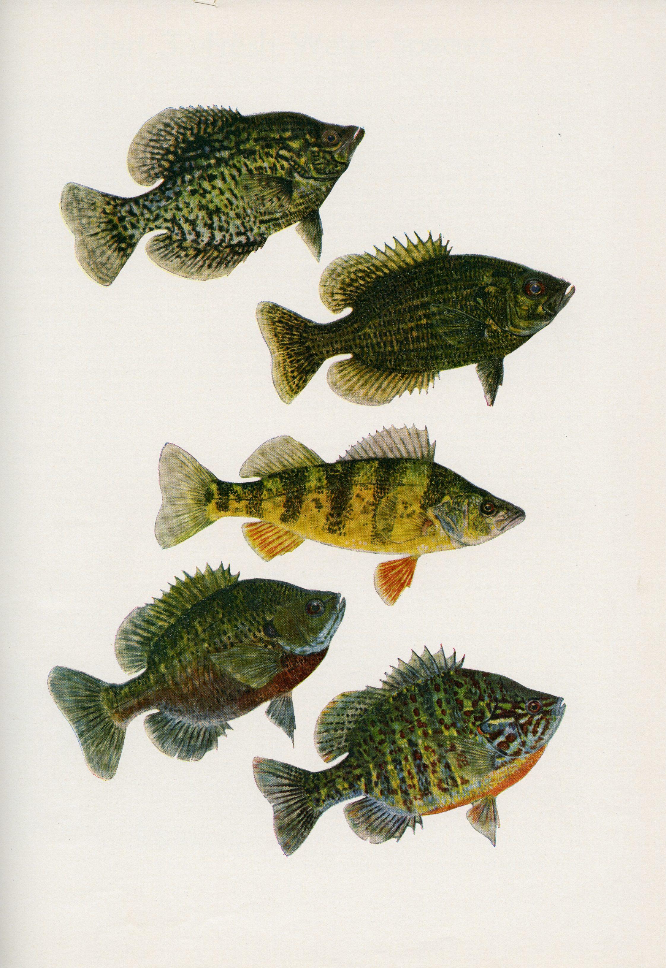 fish_87a_016